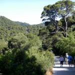 The road through the forests on Mljet Island